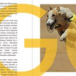 How to Create a Stylish Magazine Layout in Affinity Publisher | How To | Latest Technology News